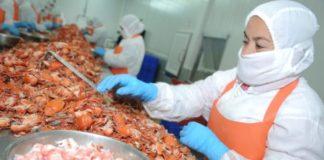 Nuevos estándares para granjas de cría de camarones ecuatorianas